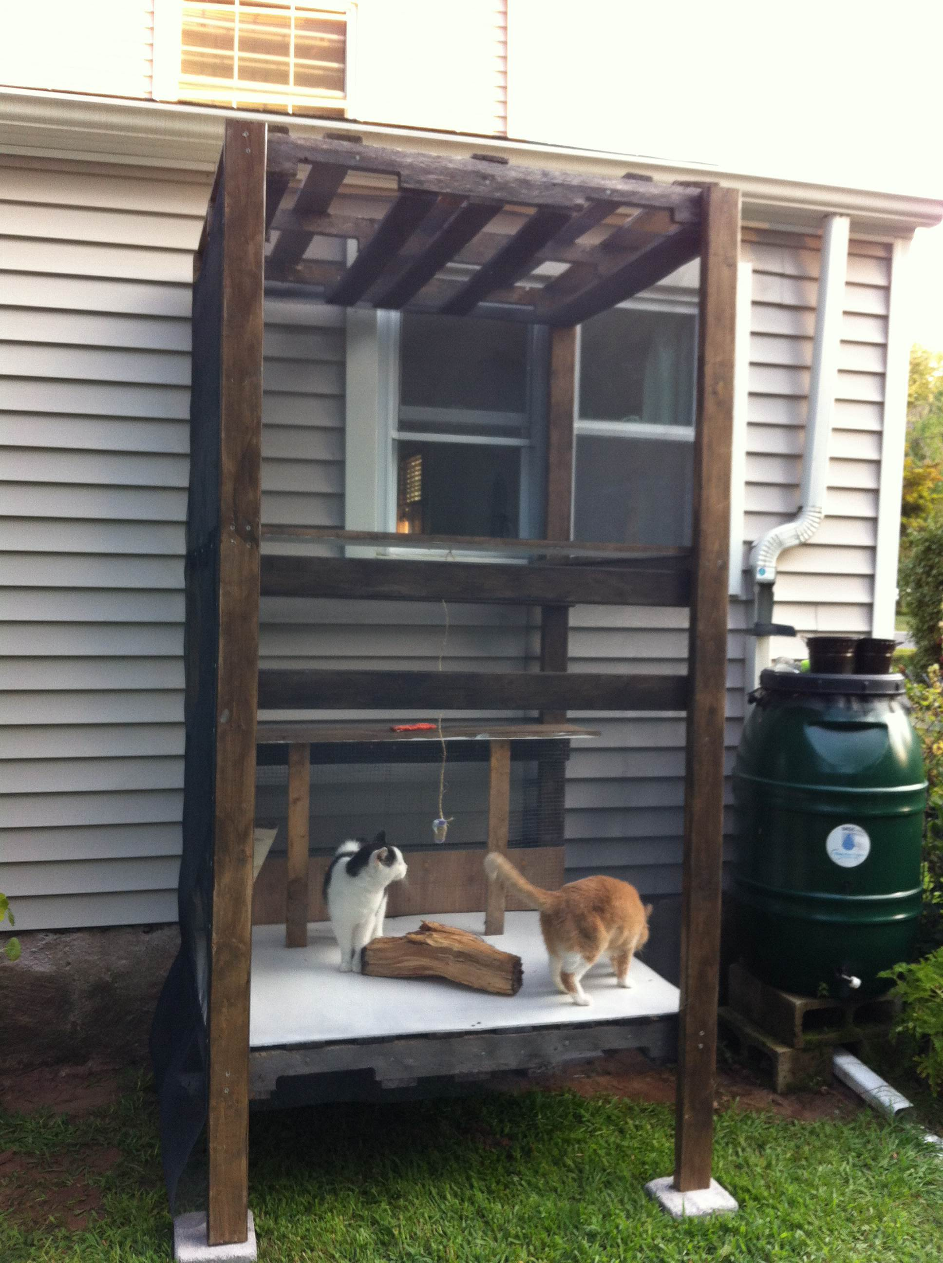 Diy Outdoor Cat Enclosure Pvc Pictures To Pin On Pinterest